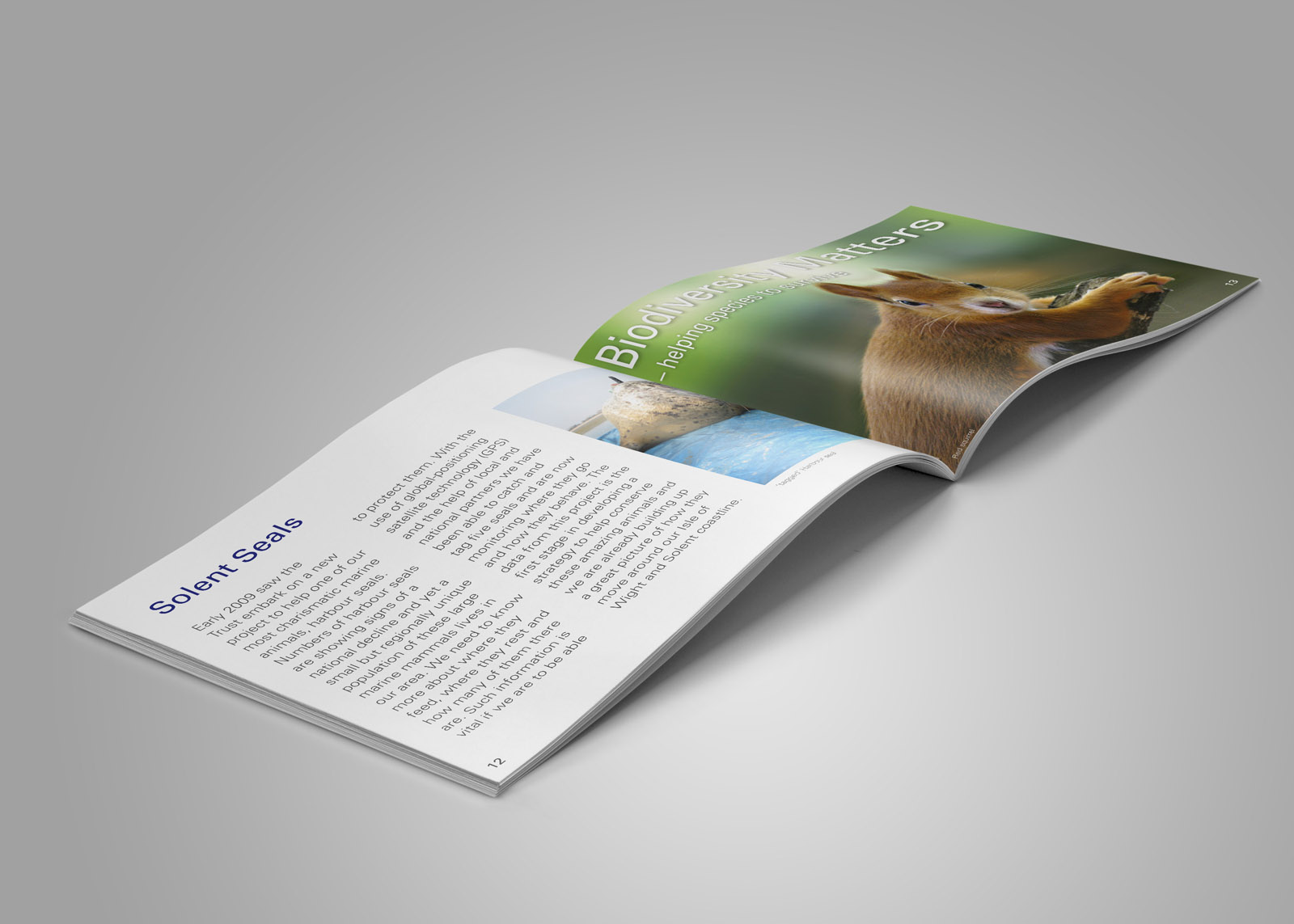 design for charity report
